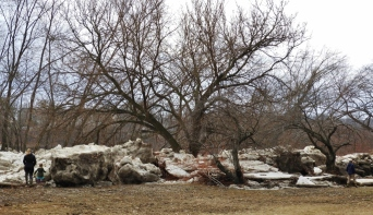 Ice boulders as tall as the people coming to see them. Ice remnants surround the West Pittston cherry blossom trees.